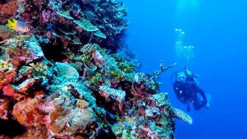 https: img-o.okeinfo.net content 2018 03 07 406 1869370 melihat-keindahan-taman-laut-olele-di-gorontalo-z8iBDCE0Su.jpg