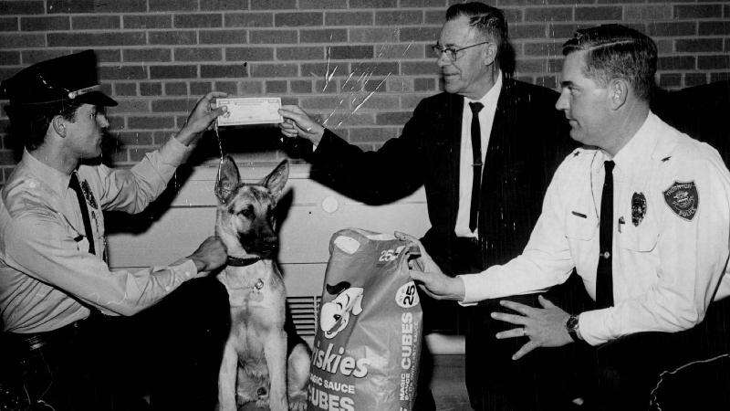 https: img-o.okeinfo.net content 2018 03 12 18 1871495 militer-as-bentuk-korps-anjing-untuk-perang-dunia-ii-psvYXPRLxe.jpg