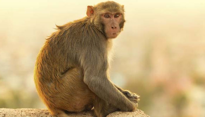 https: img-o.okeinfo.net content 2018 03 19 196 1874611 butuh-susu-monyet-ini-pelorotin-baju-turis-cantik-sampai-payudaranya-nongol-fA5ztQ0yYF.jpg