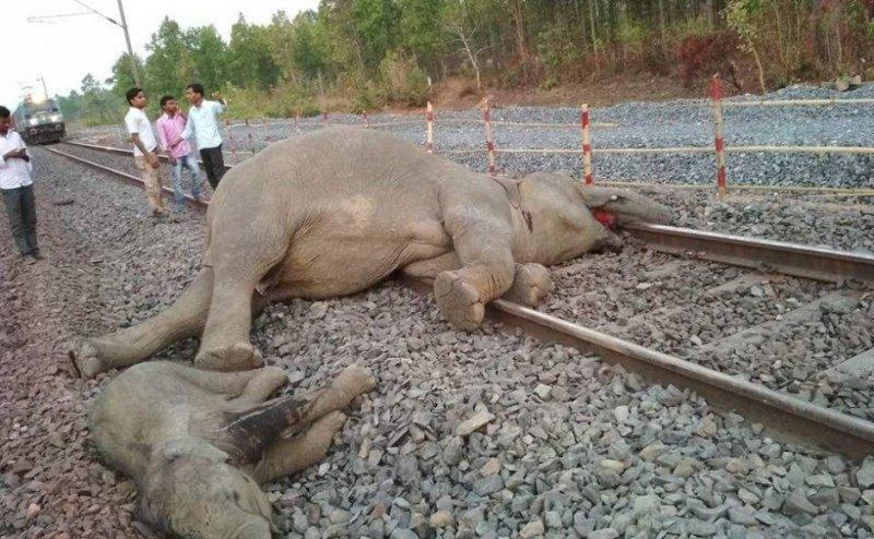 https: img-o.okeinfo.net content 2018 04 17 18 1887864 empat-ekor-gajah-tewas-tersambar-kereta-api-di-india-HNfxsrJYOj.jpg