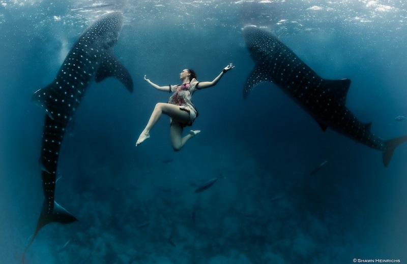 https: img-o.okeinfo.net content 2018 04 19 406 1888651 foto-foto-menakjubkan-model-cantik-menari-dengan-hiu-paus-di-bawah-laut-g0BQC2uZj7.jpg