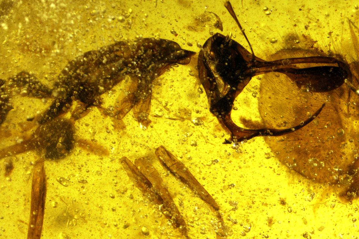 https: img-o.okeinfo.net content 2018 05 02 406 1893487 ditemukan-bentuk-semut-neraka-purbakala-mirip-setan-lihat-foto-fotonya-bikin-merinding-wL8fEYCcWQ.jpg