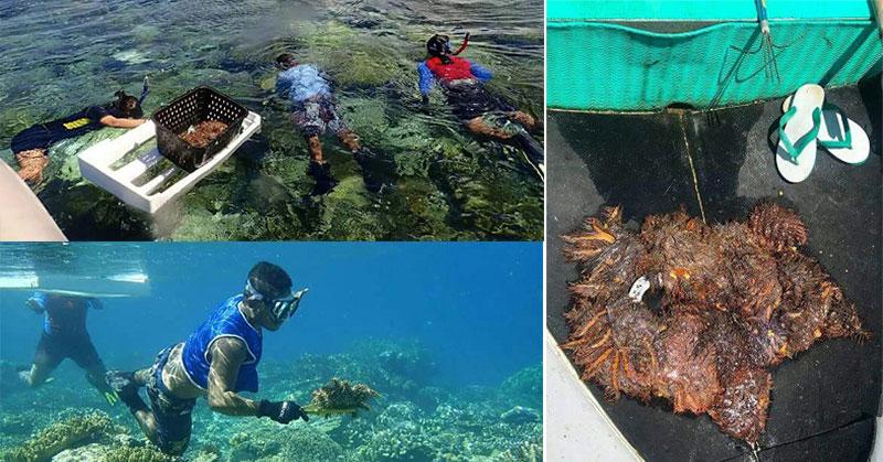 https: img-o.okeinfo.net content 2018 05 04 406 1894451 jutaan-hektar-terumbu-karang-di-raja-ampat-terancam-rusak-akibat-hama-cot-s-139z1r5Jvh.jpg