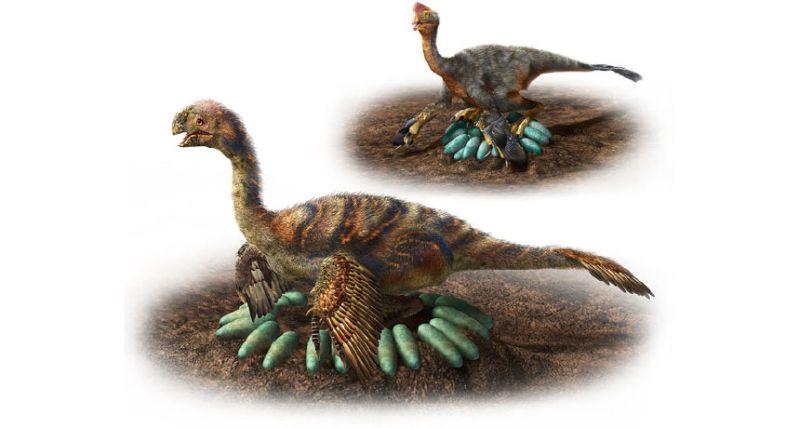 https: img-o.okeinfo.net content 2018 05 16 56 1899124 bagaimana-cara-dinosaurus-mengerami-telurnya-tanpa-pecah-V0v63sbzk0.jpg