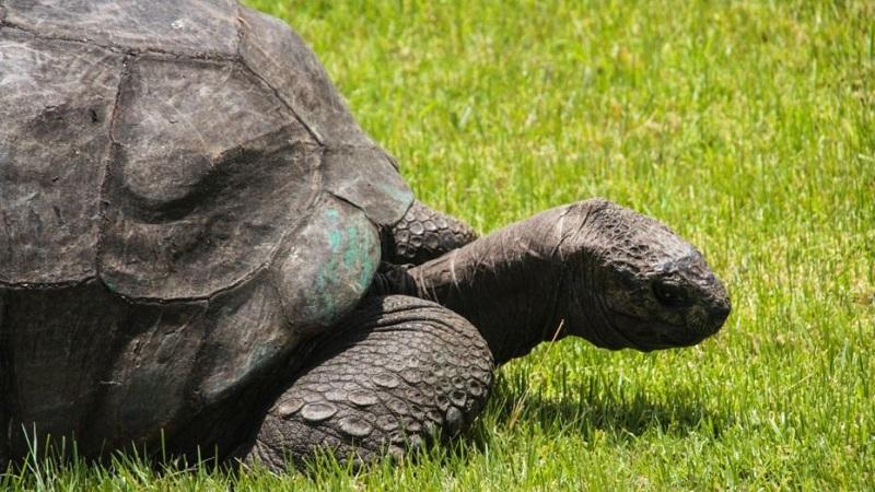 https: img-o.okeinfo.net content 2018 05 25 196 1902584 yuk-kenalan-sama-jonathan-kura-kura-tertua-di-dunia-yang-umurnya-186-tahun-7yQvbED36p.jpg