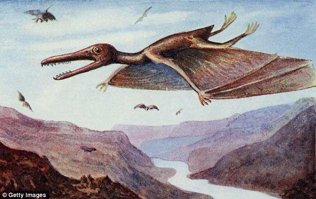https: img-o.okeinfo.net content 2018 05 25 56 1902490 ilmuan-bantah-dinosaurus-pterodactyls-bisa-terbang-JUmp8UVyqg.jpg