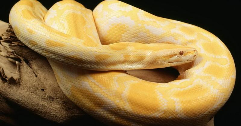 https: img-o.okeinfo.net content 2018 05 30 56 1904561 viral-video-ular-boa-melahirkan-ditonton-16-juta-kali-fcsGyNxWLP.jpg