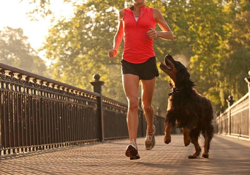https: img-o.okeinfo.net content 2018 06 04 196 1906289 wajib-baca-4-hal-ini-perlu-kamu-terapkan-sebelum-jogging-bareng-anjing-kesayangan-9s4C4blchm.jpg