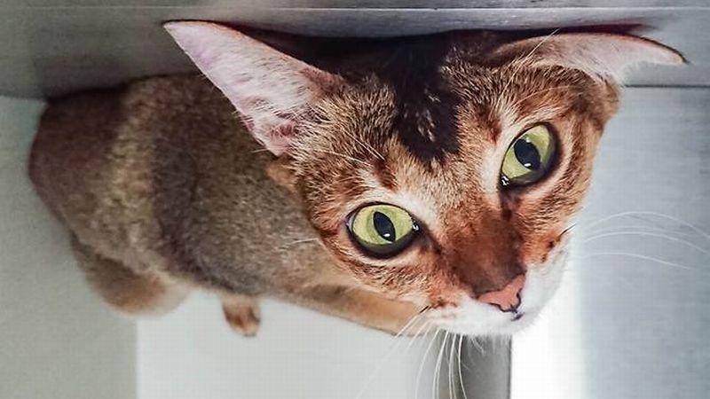 https: img-o.okeinfo.net content 2018 06 07 196 1907905 teganya-kucing-ini-dilempar-dari-atas-gedung-XF6ppU2hgw.jpg
