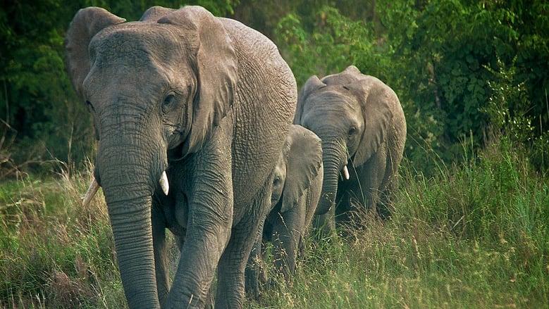 https: img-o.okeinfo.net content 2018 06 11 406 1909229 peduli-keberlangsungan-hidup-gajah-badak-bocah-7-tahun-ini-berhasil-ubah-dunia-14aj3EYfV0.jpg