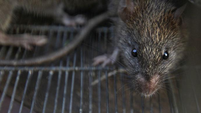 https: img-o.okeinfo.net content 2018 06 20 18 1911838 tikus-masuk-mesin-atm-di-india-uang-rp250-juta-habis-digerogoti-FfKJKGd9iK.jpg