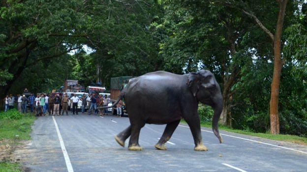 https: img-o.okeinfo.net content 2018 06 26 18 1914018 gajah-di-india-stres-akibat-terus-menerus-diusir-manusia-9Ci5J0BVvc.jpg