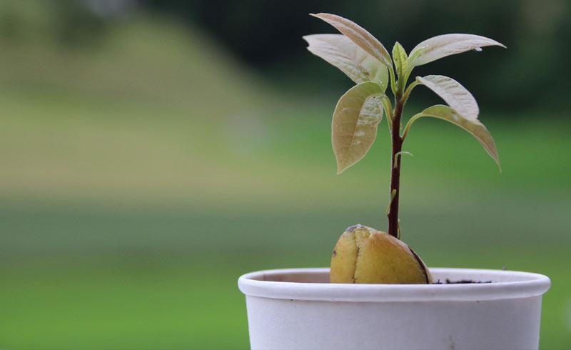 https: img-o.okeinfo.net content 2018 06 29 196 1915743 punya-lahan-kosong-di-belakang-rumah-5-pohon-buah-ini-cocok-ditanam-1TcuBpD4Br.jpg