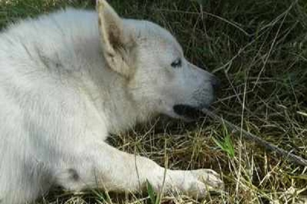 https: img-o.okeinfo.net content 2018 07 11 196 1920900 demi-selamatkan-majikan-anjing-ini-mati-tersengat-listrik-QdbNL2b8rF.jpg