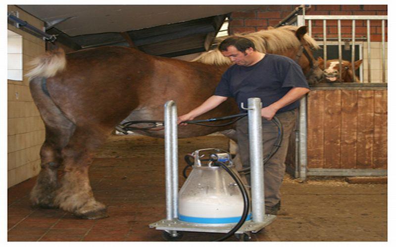 https: img-o.okeinfo.net content 2018 07 13 481 1921968 3-jenis-susu-dipercaya-bikin-greng-di-ranjang-salah-satunya-susu-kuda-liar-AwDKOZtkjv.jpg