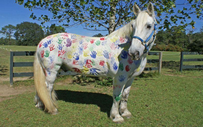 https: img-o.okeinfo.net content 2018 08 10 196 1934586 tren-melukis-di-badan-kuda-tanpa-sadar-ajarkan-anak-kejam-pada-binatang-dRltqsArNf.jpg