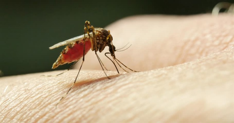 https: img-o.okeinfo.net content 2018 08 13 481 1935746 5-langkah-ini-bisa-bantu-cegah-penyakit-malaria-EOoXHbH4JJ.jpg