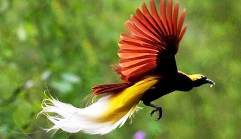 https: img-o.okeinfo.net content 2018 08 18 406 1938265 duh-cantiknya-burung-burung-khas-indonesia-j4qTzfCkyK.jpg