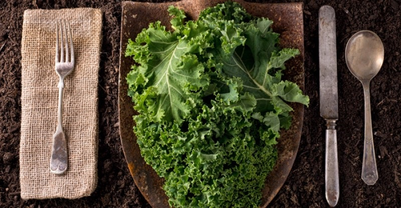 https: img-o.okeinfo.net content 2018 08 28 481 1942457 kale-sayuran-super-yang-efektif-mengontrol-gula-darah-g6DnXokY7f.jpg