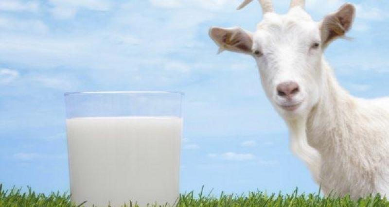 https: img-o.okeinfo.net content 2018 09 03 65 1945303 susu-kambing-etawa-disulap-jadi-jelly-suplemen-makan-manfaatnya-OYnLDVOl3K.jpg