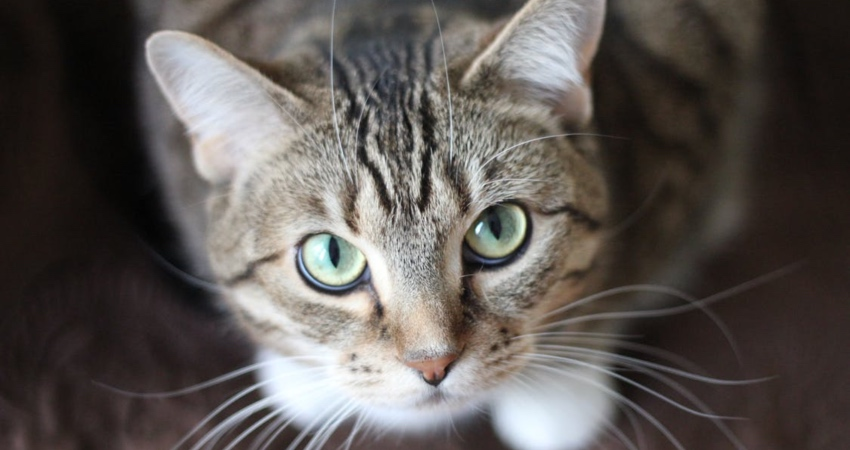 https: img-o.okeinfo.net content 2018 09 07 196 1947263 tendang-kucing-berkali-kali-wanita-malang-ini-tuai-karmanya-VfmdokH9vJ.jpg