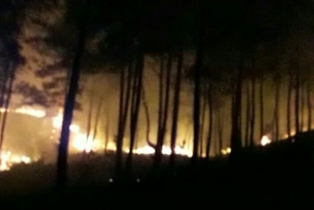 https: img-o.okeinfo.net content 2018 09 15 340 1950782 hutan-pinus-di-tana-toraja-terbakar-iMHTBDZM0X.jpg