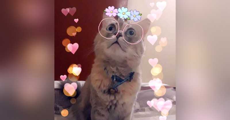 https: img-o.okeinfo.net content 2018 10 14 207 1963806 snapchat-luncurkan-filter-baru-untuk-pecinta-kucing-WSkqw9nt43.jpg