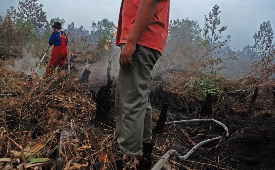 https: img-o.okeinfo.net content 2018 10 14 525 1963956 14-hari-terbakar-1-310-hektare-lahan-di-gunung-ciremai-hangus-78d5olgTjv.jpg