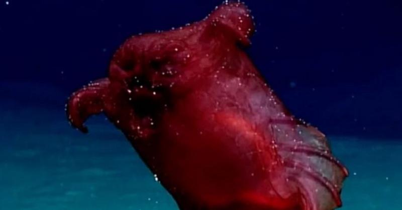 https: img-o.okeinfo.net content 2018 10 22 56 1967415 monster-laut-ayam-tanpa-kepala-tertangkap-kamera-di-samudra-84aaP34p4l.jpg