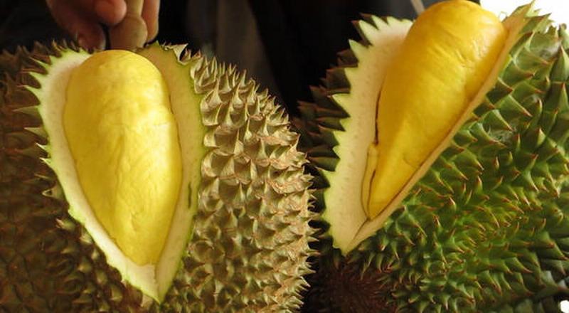 https: img-o.okeinfo.net content 2018 11 06 298 1974101 penis-banteng-sampai-durian-ada-di-museum-makanan-menjijikkan-xEuJFImkIz.jpg