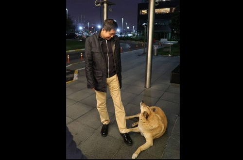 https: img-o.okeinfo.net content 2018 11 09 320 1975507 menteri-jonan-tiba-tiba-dihampiri-anjing-liar-saat-transit-di-istanbul-Av1AD9yJSo.jpg
