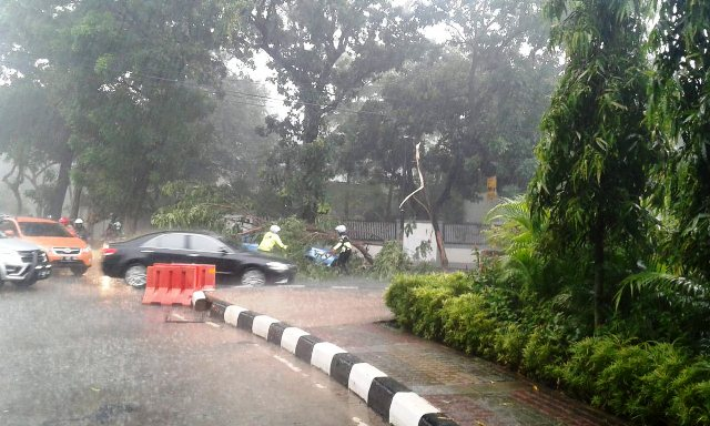 https: img-o.okeinfo.net content 2018 11 09 338 1975639 diguyur-hujan-pohon-tumbang-timpa-taksi-di-jaksel-Nk5O5CS9gI.jpg