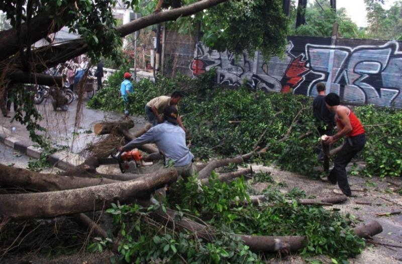 https: img-o.okeinfo.net content 2018 11 10 510 1976065 10-pohon-di-yogyakarta-tumbang-akibat-hujan-disertai-angin-kencang-Y06UfcOonN.jpg