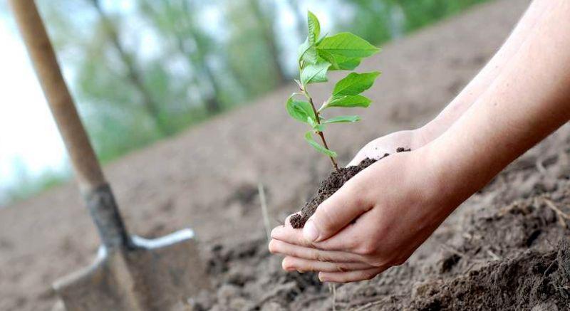 https: img-o.okeinfo.net content 2018 11 24 406 1982344 peringati-hari-pohon-sedunia-kebun-raya-gencarkan-koleksi-tanaman-obat-rnpiiXiLFE.jpg
