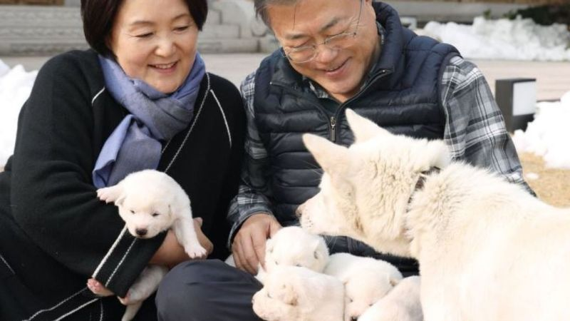 https: img-o.okeinfo.net content 2018 11 26 18 1982924 anjing-perdamaian-hadiah-kim-jong-un-lahirkan-enam-ekor-anak-wWAeobdyrq.jpg