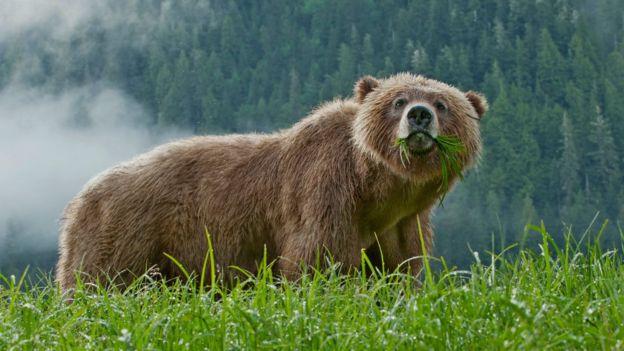 https: img-o.okeinfo.net content 2018 11 30 18 1984828 ibu-dan-bayi-perempuannya-tewas-diserang-beruang-RW6c5eviz9.jpg