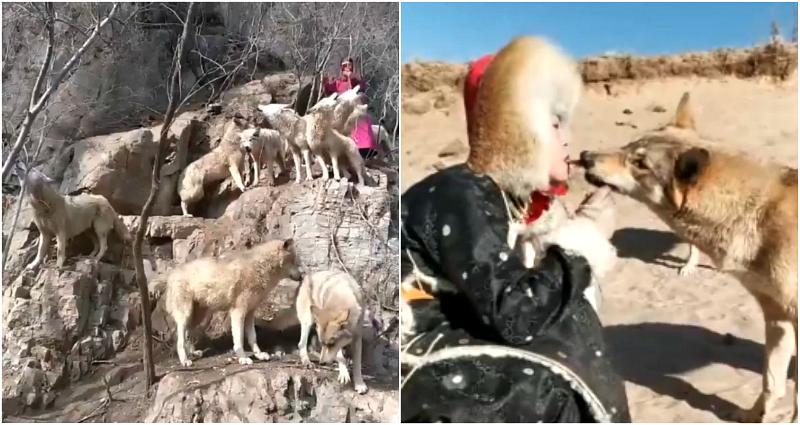 https: img-o.okeinfo.net content 2018 12 05 196 1987073 zhou-xinyue-si-ratu-serigala-yang-pelihara-36-serigala-liar-layaknya-anjing-NtBC1nbdob.png