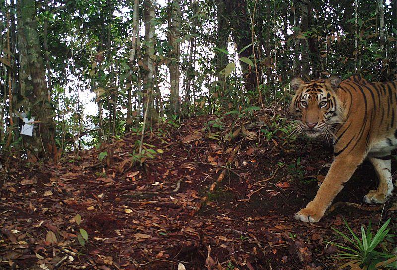 https: img-o.okeinfo.net content 2018 12 05 512 1987109 mencekam-2-harimau-kebun-binatang-semarang-lepas-dari-kandang-9LOwU6aorK.jpg