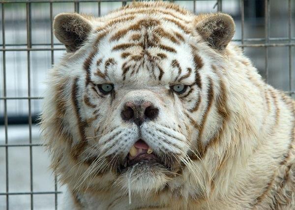 https: img-o.okeinfo.net content 2019 01 11 196 2003068 mengenang-kenny-si-harimau-putih-down-syndrome-cRLXAcrqNj.jpg