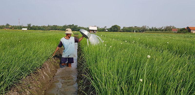 https: img-o.okeinfo.net content 2019 01 17 320 2005919 kontribusi-kementan-tingkatkan-kesejahteraan-petani-hingga-kurangi-kemiskinan-YCkyA1ndLJ.jpg