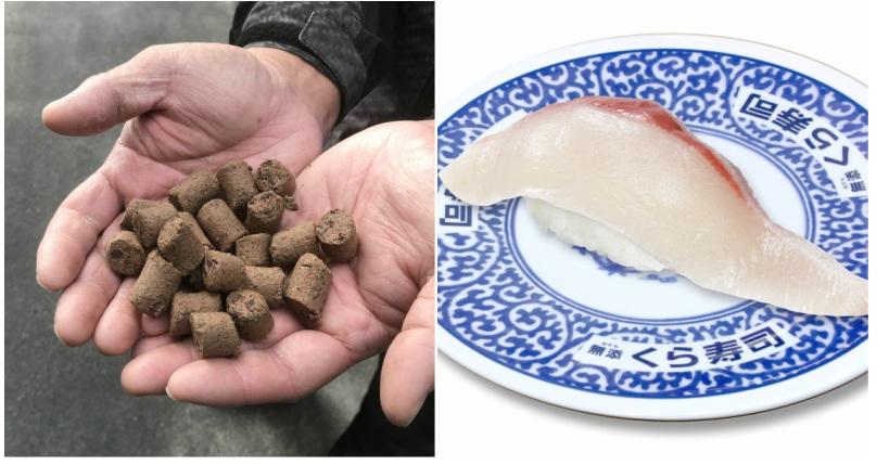 https: img-o.okeinfo.net content 2019 01 26 298 2009745 sushi-dari-ikan-yang-diberi-pakan-cokelat-gimana-rasanya-4E9he1Xb7r.jpg