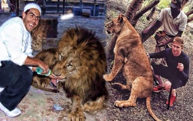 https: img-o.okeinfo.net content 2019 02 07 51 2014766 5-pemain-bintang-yang-kedapatan-main-bareng-singa-nomor-2-paling-berani-vToJleeL5D.jpg