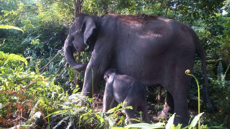 https: img-o.okeinfo.net content 2019 02 11 340 2016505 kondisi-gajah-mengkhawatirkan-perusahaan-di-riau-diminta-lakukan-perlindungan-dHI1Ig2lGf.jpg