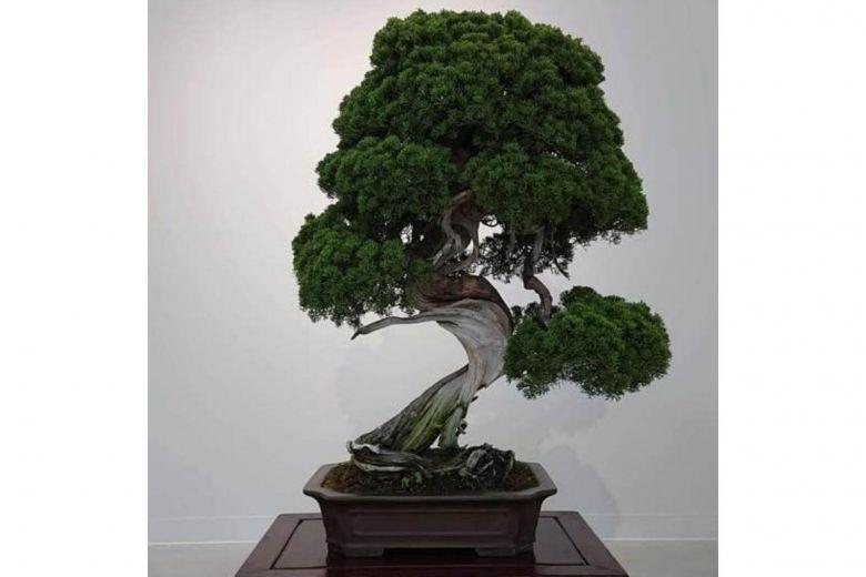 https: img-o.okeinfo.net content 2019 02 12 18 2016816 bonsai-berusia-400-tahun-dicuri-pemilik-kirim-pesan-untuk-malingnya-yhTfwSpyQn.jpg