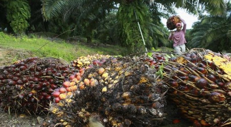 https: img-o.okeinfo.net content 2019 02 14 320 2017765 industri-kelapa-sawit-perlu-bentuk-koalisi-berkelanjutan-pSiZrJpUon.jpg