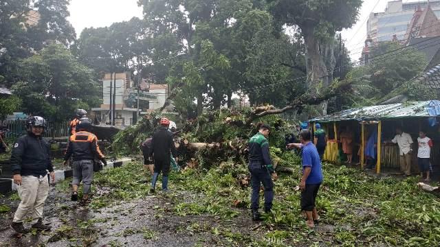 https: img-o.okeinfo.net content 2019 02 19 519 2020281 pohon-bertumbangan-di-malang-pasutri-tertimpa-hingga-luka-parah-H9Kcp5Bd8T.jpg