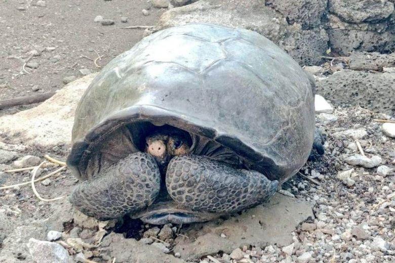 https: img-o.okeinfo.net content 2019 02 20 18 2020593 diduga-sudah-punah-seabad-lalu-spesies-kura-kura-raksasa-ditemukan-di-galapagos-BSt8d6nHxG.jpg