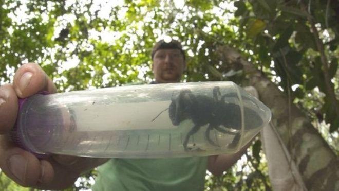 https: img-o.okeinfo.net content 2019 02 22 337 2021459 lebah-terbesar-di-dunia-ditemukan-kembali-di-maluku-sempat-dikira-sudah-punah-pivIomuWkN.jpg