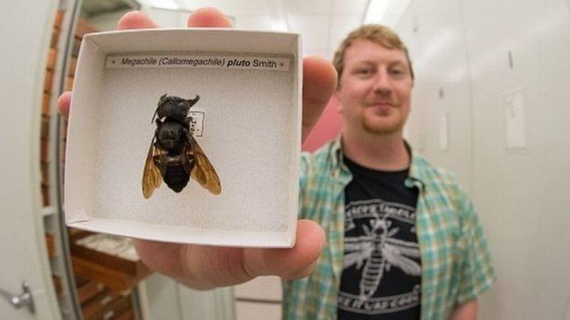 https: img-o.okeinfo.net content 2019 02 22 340 2021339 lebah-terbesar-di-dunia-ditemukan-di-kepulauan-maluku-KvFSUq1yDT.jpg