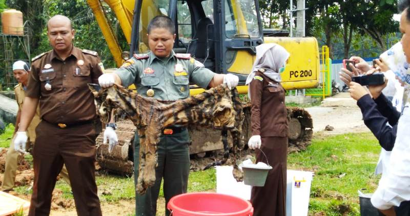 https: img-o.okeinfo.net content 2019 02 25 340 2022718 kulit-harimau-dan-gading-gajah-barang-bukti-kejahatan-dibakar-8Ffuqdl75X.jpg